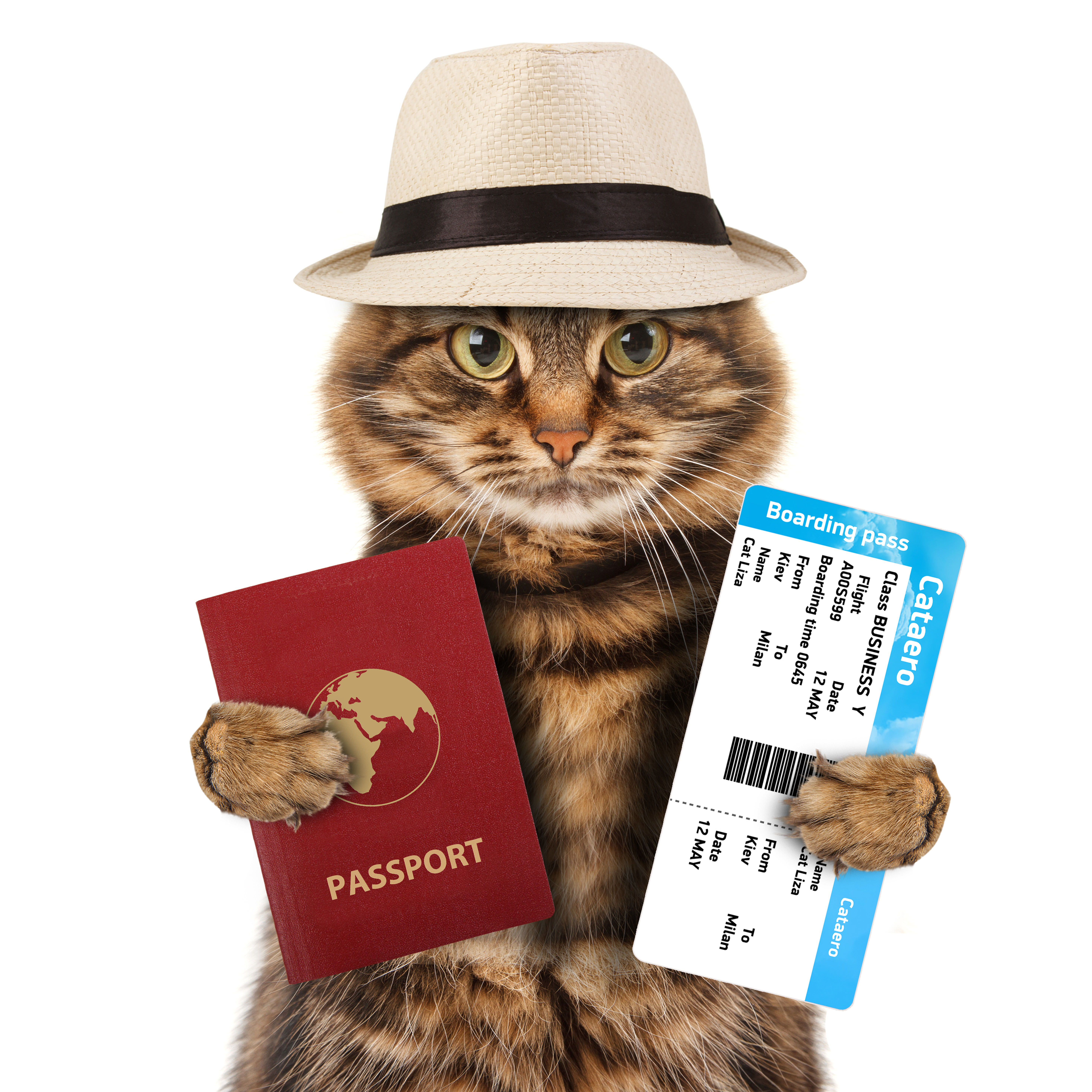 Cat Passport