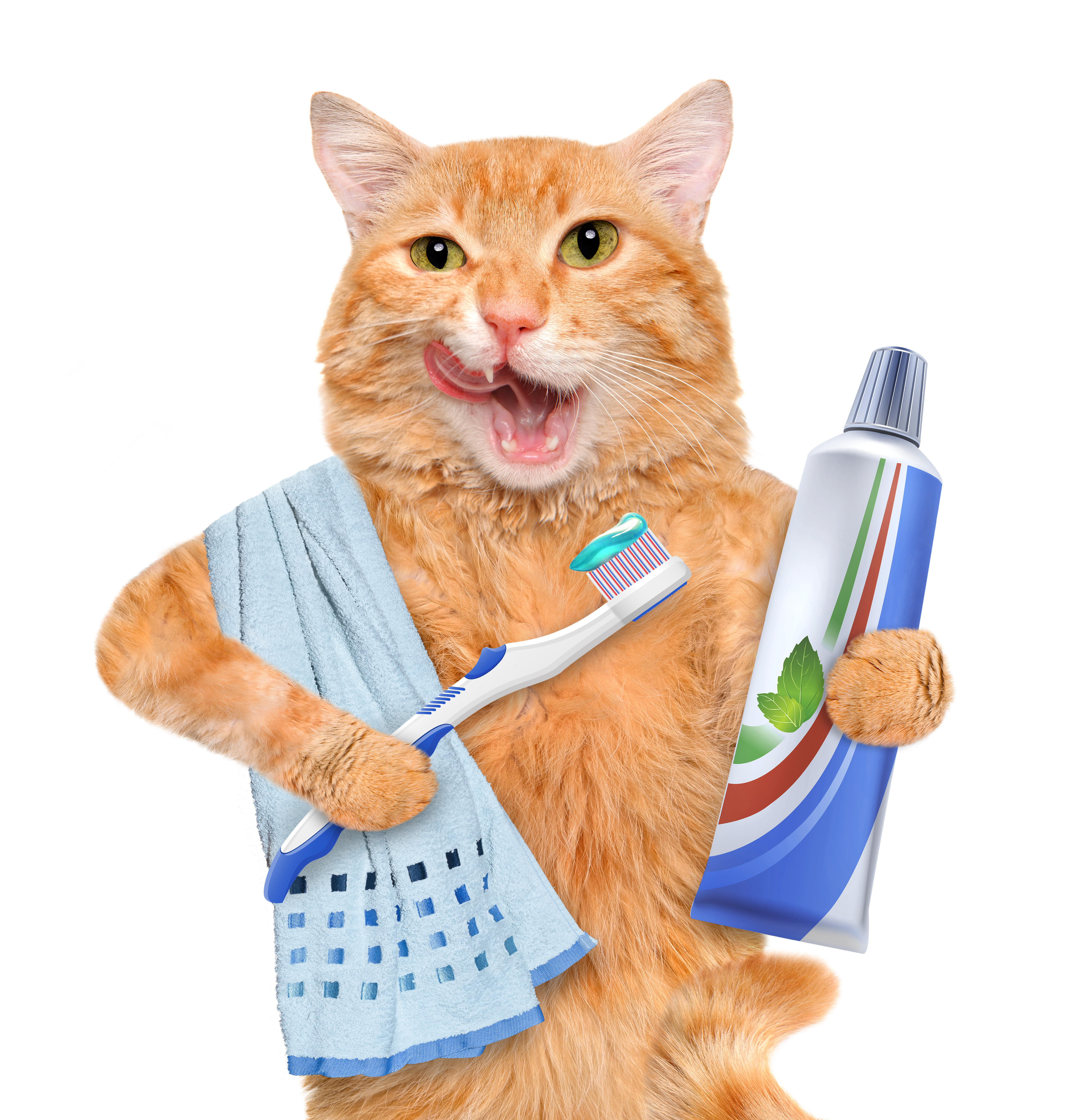 Dental Homecare For Cats