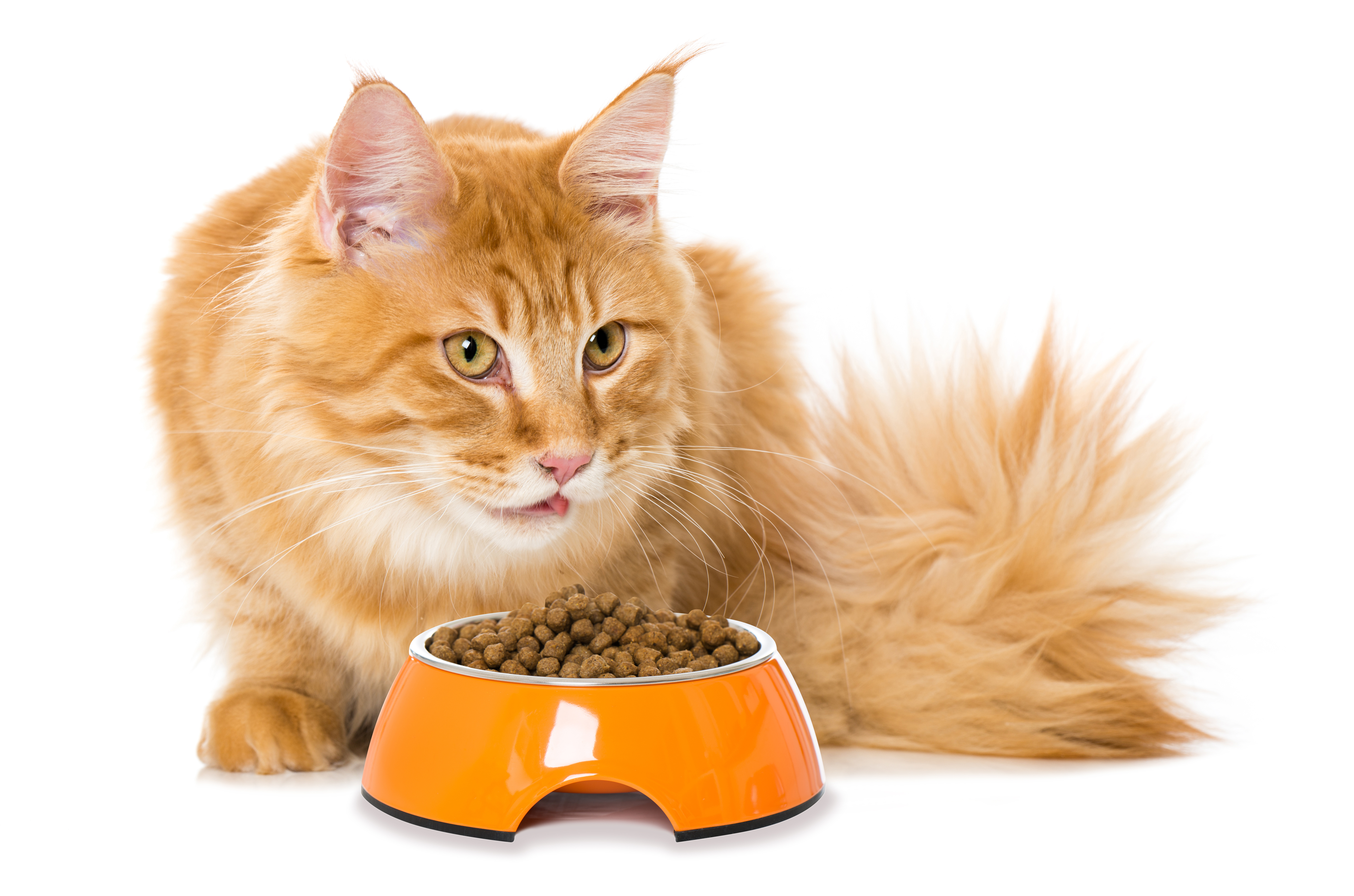Grain Free Diet Bad For Cats